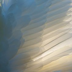 Wing of a Swan...close up