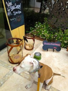 Hotel La Jolla Pet Friendly San Diego Hotels