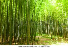 Path in the bamboo forest  - stock photo