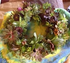 My first succulent wreath that I made.