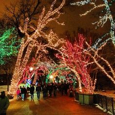 If you are looking for something to do in the winter time, check out Zoo Lights at Lincoln Park Zoo.  Sooo pretty.  And it's free!!!!!