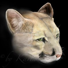 """Puma"" · Wildcat Drawing by Karin Russer · Technique: Colored Pencils and Graphite · Please visit my Gallery: www.grafikundmehr.de/fineart  #art #fineart #painting #arttovisit #gallery #painter #artist #artalive #lifeofanartist #supportart #artbeat #modernart #contemporaryart #watercolor #drawing #illustration #animal #animals #pets #animalart #animalportrait #portrait #cat #cats #wildcat #puma #mountainlion"