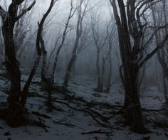 Photography Winter Forest Dark Ideas Source by tubbytaku Source by tubbytaku … Winter Forest, Dark Forest, Misty Forest, Magical Forest, Photography Winter, Pinterest Photography, Forest Photography, Nature Photography, The Ancient Magus