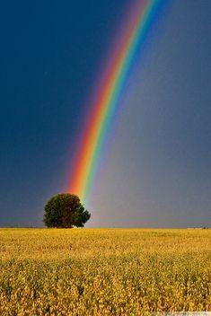 ✯Rainbow Colors  by *KonradJanicki*✯