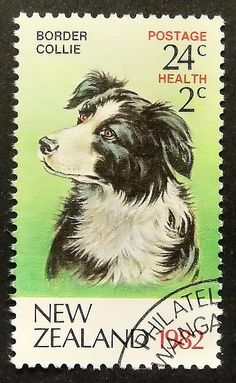 Border Collie -Dog -New Zealand -15692 Framed Postage Stamp Art by PassionGiftStampArt on Etsy