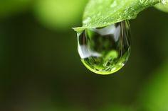 https://flic.kr/p/dmsNv3 | Raindrop on leaf | Raindrop on leaf. Focus stacked using zerene