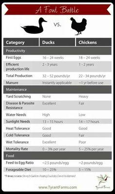 Chicken chart...