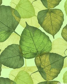 Banyan Leaves Translucent  Pattern - Lime Green