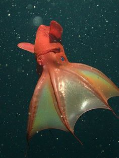 The vampire squid is neither a squid nor an octopus. Unique.