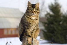 Winter Weather Tips to help feral cats  Stray and feral cats are at home outside, but they can always use some extra help in cold or severe weather. Follow these tips to help them stay even safer, warmer, and healthier during severe storms and winter months.