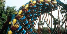 Roller Coasters & Thrilling Theme Park Rides | Busch Gardens Tampa Bay