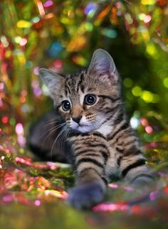 apositivelybeautifulblog:    (via ~❤~❤~❤~ Kitty Love ~❤~❤~❤~ / Christmas Kitten from William Selden and Gary Card)