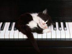 Durmiendo sobre el teclado (del piano)