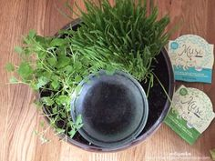 Create a cute DIY Cat Water Bowl Planter with catnip and cat grass-my cat LOVED this!