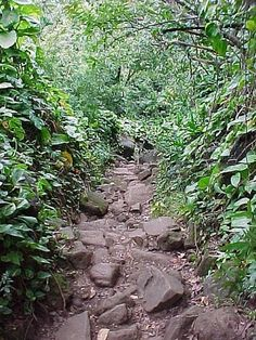 Photo of Kalalau Trail - Hanalei, HI, United States. everybody slips...