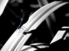 The most beautiful dragonfly I have ever seen