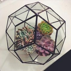geo dome with succulents