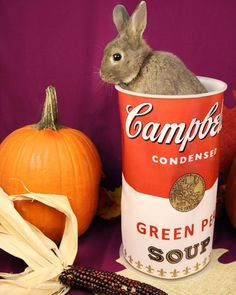 Is that a hare in your soup?  #badpuns Now that we've gotten your attention you should really consider attending our Bunny Basics this weekend. This free hour-long class will teach all new rabbit parents (or anyone thinking of adopting a bun) all about these lovable trainable pets! MORE INFORMATION ON OUR WEBSITE. . . . . . #bunny #rabbit #rabbitsofinstagram #pumpkin #soup #badpun #lol #funny #class #free #humane #hsbroward #humanesociety #education #fortlauderdale #florida #southflorida…