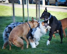 this is how dogs work it out for themselves