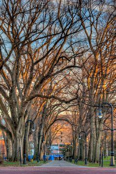 Penn State Elms (JK Photography)