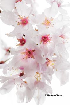 Garden, Flowers, Plants, Garten, Flora, Plant, Lawn And Garden, Royal Icing Flowers, Outdoor