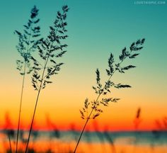 Grass And Colorful Sunset photography nature sunrise