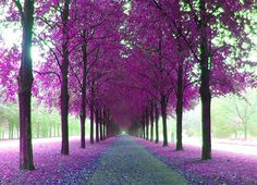 Image discovered by picturefancy. Find images and videos about nature, purple and tree on We Heart It - the app to get lost in what you love. Purple Love, All Things Purple, Purple Stuff, Beautiful World, Beautiful Places, Beautiful Pictures, Simply Beautiful, Purple Trees, A Course In Miracles