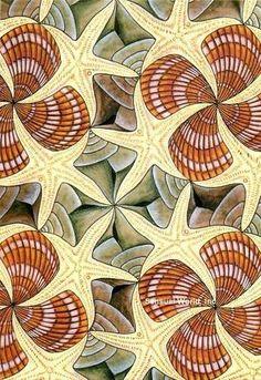 Shells and Starfish, MC Escher Mc Escher, Escher Kunst, Escher Art, Tesselations, Magritte, Dutch Artists, The Artist, Claude Monet, Gravure