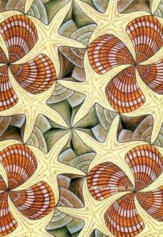 Shells and Starfish by MC Escher