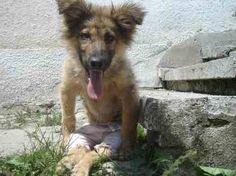 Borko's story is like too many other dogs around the world. In many countries, dogs have no protection from those who harm them and police may even reward abusers.