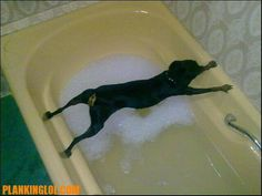 Even Dogs are Planking!