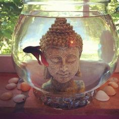 Check out this Buddha fish bowl! The post Buddha fish bowl!… appeared first on Home Decor . Meditation Rooms, Buddha Meditation, Meditation Corner, Asian Home Decor, Diy Home Decor, Zen Room Decor, Buddha Kunst, Deco Zen, Buddha Decor
