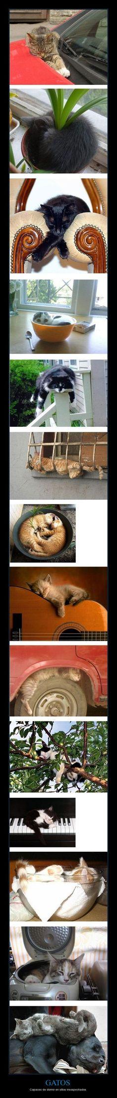 GATOS - Capaces de dormir en sitios insospechados