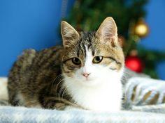 Das perfekte Weihnachts-Dinner für Katzen Cats, Animals, Gatos, Animales, Kitty Cats, Animaux, Animal, Cat, Kitty
