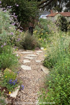 Gravel path and stepping stones through California native plant front yard garden