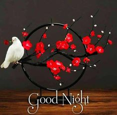Good Night Images Good Night For Him, New Good Night Images, Romantic Good Night Image, Good Night My Friend, Funny Good Morning Images, Lovely Good Night, Beautiful Good Night Images, Good Morning Images Flowers, Good Morning Cards