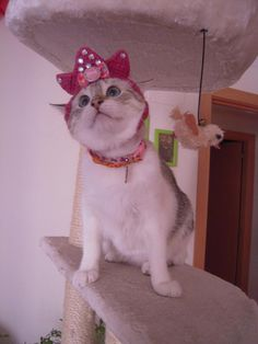 I am not sure this hat looks like a crown, mum. By Chofie http://cmji.me/1aBqufO #cat #cute