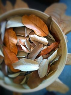 magnolia leaves photo by heather ross