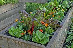 Vyvýšené záhony sú moderné, vkusné a prinášajú úrodu bez starostí. No kto by im odolal?