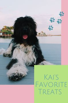 This snow dog living in Florida loves anything that involves ice, these frozen treats are easy to make and healthy for our fur friends. #homemadetreats #dogtreatrecipes #summertreats #popsicles #dogs Summer Treats, Holiday Treats, Snow Dogs, Homemade Dog Treats, Dog Treat Recipes, Frozen Treats, Popsicles, Pup, Florida