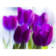 tulip_group_by_jakwak.jpg (800×600)