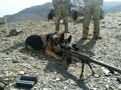 One loud bark; one long-range bite http://dogcoachinggenius.com/category/dog-training-tips/