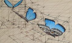 araujobutterflies2 - Rafael Araujo's Drawings Merge the Worlds of Math and Art