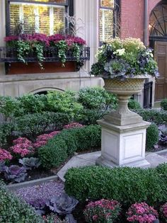 Mums, ivy, and boxwood planters.  Classy and traditional windowboxes and garden.  coffeepearlsandpoetry