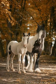 Fall Photography of Horses