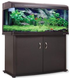 685 Best Aquarium Ideas And Design Images Aquarium Ideas Fish