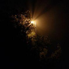 Fog+Streetlight=Holy Light #light #streetlight #fog #dark #trees #street #holy #holycrap