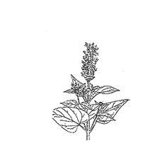 Koreaniiso | Osastot | Hyötykasviyhdistys Lotus Flower, Herbs, Tattoos, Flowers, Tatuajes, Tattoo, Herb, Royal Icing Flowers, Lotus Flowers