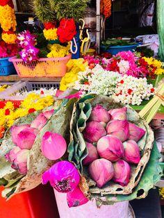 Photo Editions by Jane Walker 2019 Singapore Singapore, Apple, Fruit, Pink, Food, Apple Fruit, Essen, Meals, Pink Hair