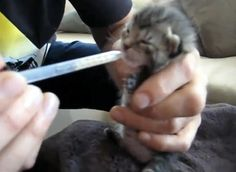 man rescued kitten from trash nursed her